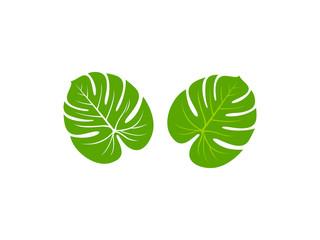 Monstera leaf icon vector illustration