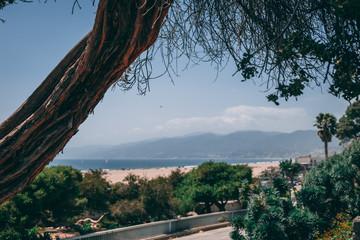 Tree overlooking beach