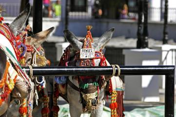 burro taxi en spain