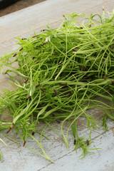 fresh micro herbs