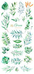Watercolor Green collection with 25  elements.Texture with green,succulent,leaves,tropical leaves,foliage.Perfect for wedding,invitations,greeting cards,quotes,pattern,bouquet,logos,Birthday cards etc