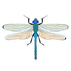 vector, isolated, dragonfly, insect