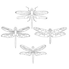 sketch of dragonfly, set