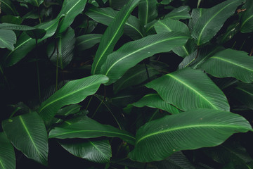 Green leaves Low key modern style toned background image