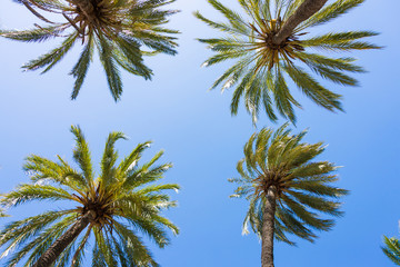 Green palm trees from below against blue sky as backgroung