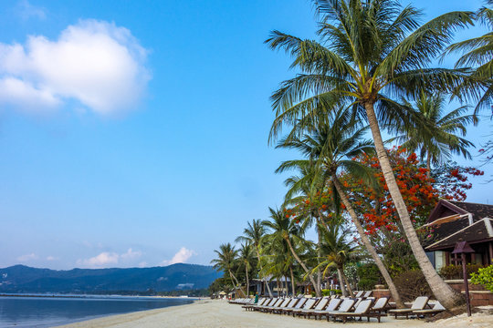 Deckchairs on the beach waiting for tourists, Chaweng Beach, Ko Samui, Thailand, Asia