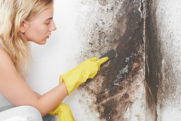 Disinfection of Aspergillus fungus. The girl in yellow gloves removes black mold from the wall at home conditions with a spatula..99
