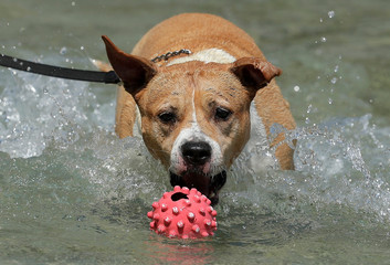 A dog jumps after a ball in a public fountain in Vienna