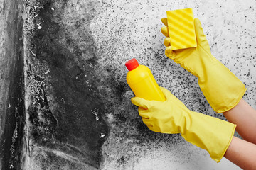 Disinfection of Aspergillus fungus. A hand in a yellow glove removes black mold from the wall in the apartment with a sponge. Detergents..77