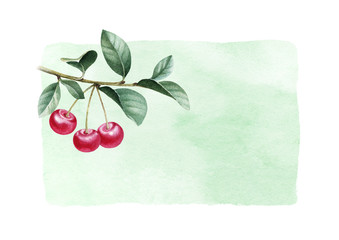 Watercolor illustration of cherry