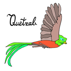 Flying quetzal bird with an inscription. Hand drawn sketch