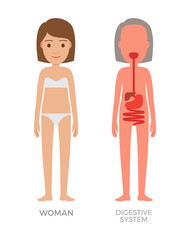 Digestive System and Woman Vector Illustration