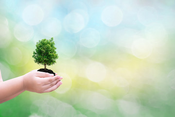 Ecology concept child human hands holding big plant tree with on blurred background world environment