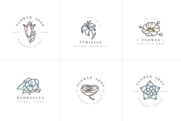 Vector feminine signs and logos, templates set. Floral Illustration-hydrangea, ranunculus, anemone and lily. Premium quality colorful emblems.
