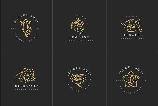 Vector feminine signs and logos, templates set. Floral Illustration-hydrangea, ranunculus, anemone and lily. Premium golden quality emblems.