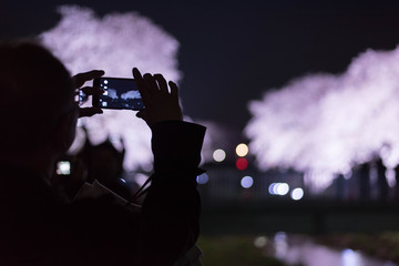 Picture of cherry blossoms at night