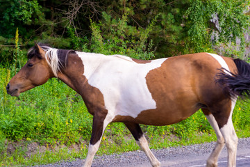 A lone brown and white colored horse without a saddle and a bridle
