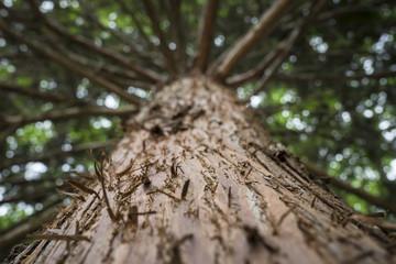 Baum im Park