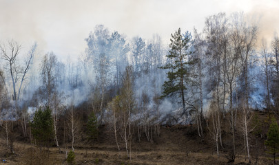 forest fire, burning forest
