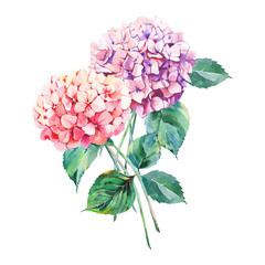 Beautiful bright elegant autumn wonderful colorful tender gentle pink herbal floral hydrangea flowers with green leaves bouquet watercolor hand illustration. Perfect for greetings card, textile