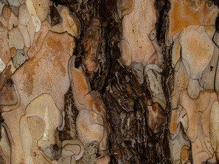 Tree bark texture with dark brown crack