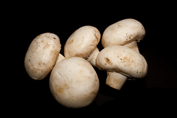 mushrooms isolated on a black background