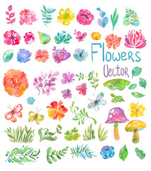 Watercolor beautiful floral design, big collection