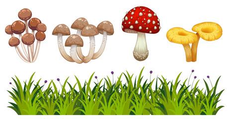 Set of wild mushroom