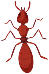 An isolated red ant