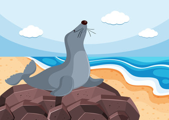 Gray seal on the stone