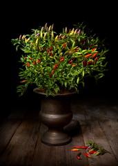 Natura morta con pianta di peperoncino ornamentale