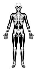 Human Skeleton Figure Medical Silhouette