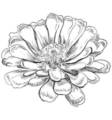 Vector hand drawing flower 6
