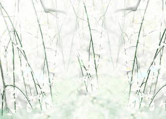 Flower textile design Tougenkyou