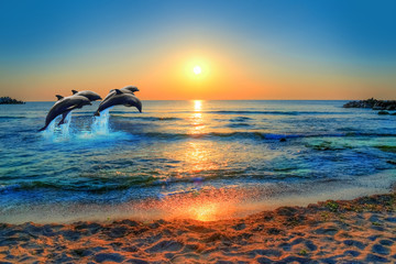 Foto op Plexiglas Dolfijn Dolphins jumping in the blue sea of Thailand at sunset