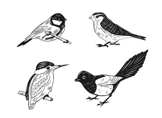Set of of birds and flowers, line drawings, ink drawing. Hand drawn vector illustration.