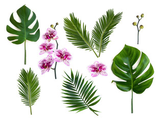 Tropical leaves palm tree, monstera and palm tree cycas revoluta ( sago palm ) with pink flowers moth orchids on a white background. Top view, flat lay.