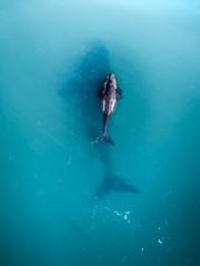 Australia - Whales 01