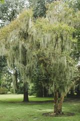 Trees in Savannah Georgia