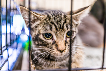 Portrait of one extremely sad tabby kitten with big glossy eyes in cage waiting for shelter adoption