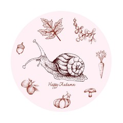 Autumn Animal, Illustration Hand Drawn of Snail with Berries, Apple, Carrot, Mushroom, Pumpkin, Acorn and Maple Leaf. Symbolic Animal to Show The Signs of Autumn Season.