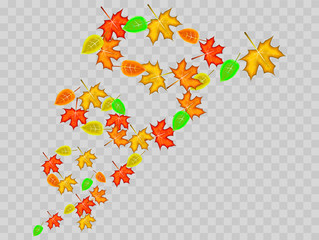 Vortex made from colorful maple and tree leaves on transparent background. Vector illustration
