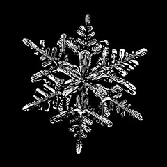 This illustration based on macro photo of real snowflake: large stellar dendrite snow crystal with fine hexagonal symmetry, complex ornate shape and six long, elegant arms with side branches.