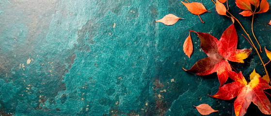 Autumn background with colored red leaves on blue slate background. Top view, copy space