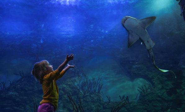 Little girl and a carpet shark at aquarium