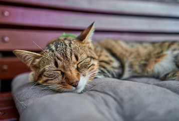 cat lying on a pillow