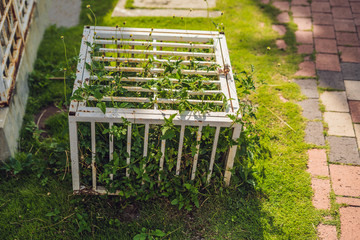 Nature in a cage. Ccage with locked plants