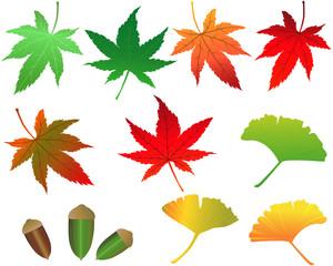 秋の紅葉素材 モミジ イチョウ どんぐり