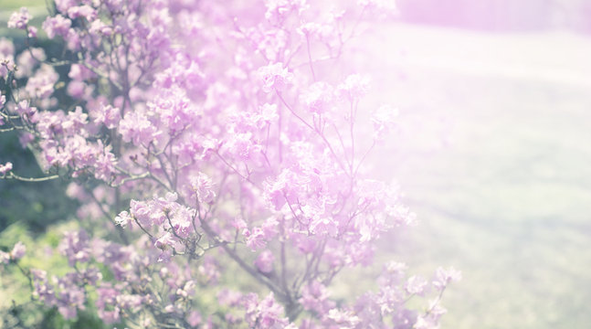 Banner Beautiful branches with flowers rosemary on the background of the sky defocus