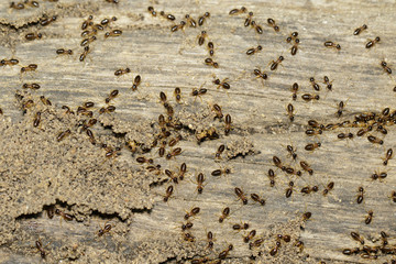 Image of termites are on stumps. Insect. Animal.